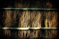 Sun Burned Fence